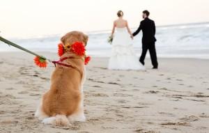 Matt Lusk_casamento em buzios_cachorro_cerimônia_1